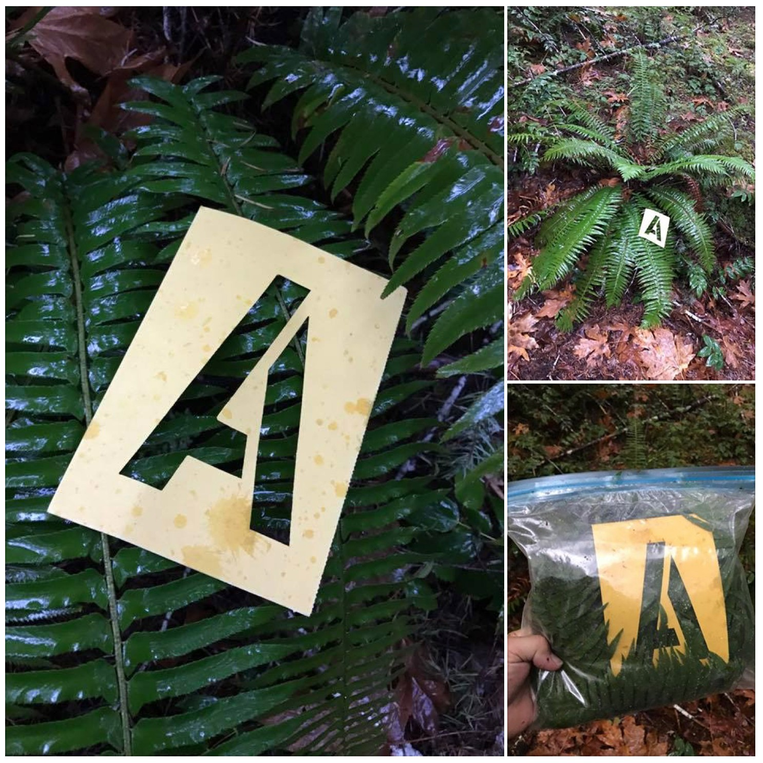 """Xavier Cortada, """"Forest Words (A),"""" 2016 -- HJ Andrews Experimental Forest, Oregon"""