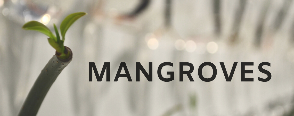 MANGROVES (1)