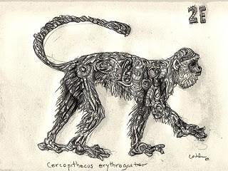 2E-Cercopithecus_erythrogast