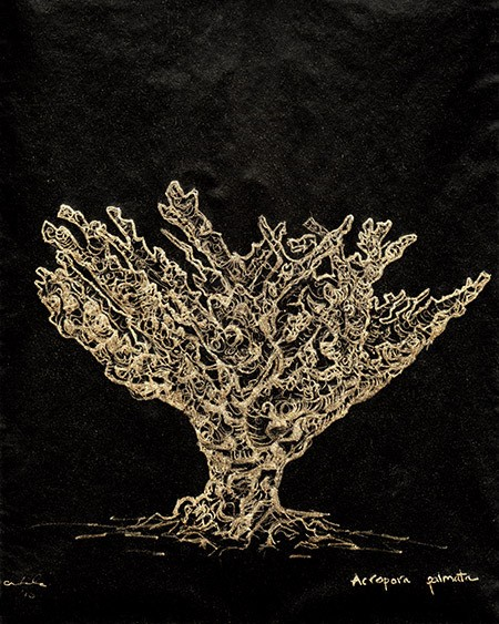 Staghorn_Coral