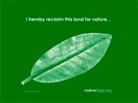 cortada_green_flag