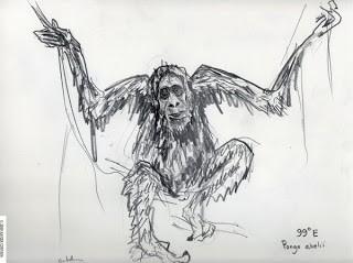 cortada_orangutan_99E
