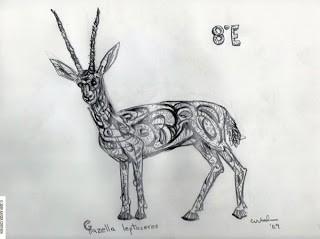 cortada_slender_horned_gazelle_8e