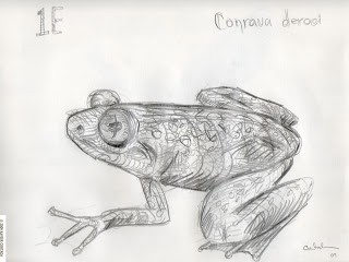 cortada_togoslippery_frog